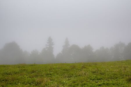 View of forest trees and grass field creating beautiful nature scene in fog. The image is captured in Trabzon/Rize area of Black Sea region located at northeast of Turkey.