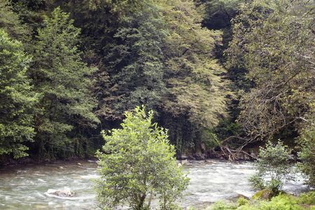 View of trees and Firtina river. The image is captured in Rize area of Black Sea region located at northeast of Turkey.