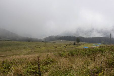 View of high plateau village at mountain and forest in fog creating beautiful nature scene. The image is captured in Trabzon/Rize area of Black Sea region located at northeast of Turkey.