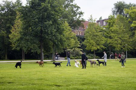 View of people hanging out, dogs playing on grass field at Vondelpark in Amsterdam. It is a public urban park of 47 hectares. It is a summer day. 報道画像