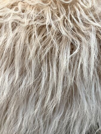 Close up view of fake, artificial, fluffy wool fur background. Archivio Fotografico