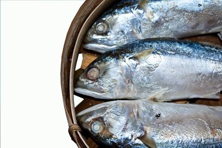 Mackerel in the third basket of the fresh fish. Stock Photo - 9369261