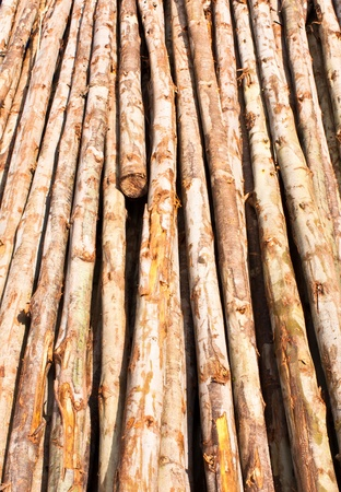 Many wood bracing. It is used in construction. Stock Photo - 10906648