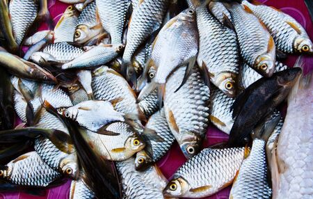 Many fish in a basket placed on the market. Stock Photo