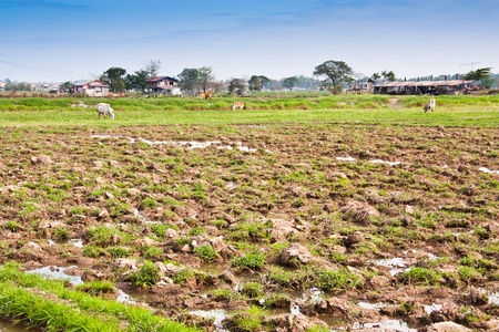 Ground for the cultivation of farmers in Laos.