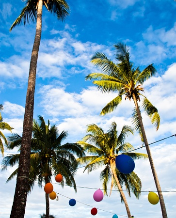 Coconut trees with multi-colored balloons. Was designed as part of the carnival. photo