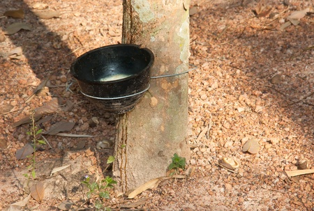 tapper: Plastic cup with handle black latex from rubber trees