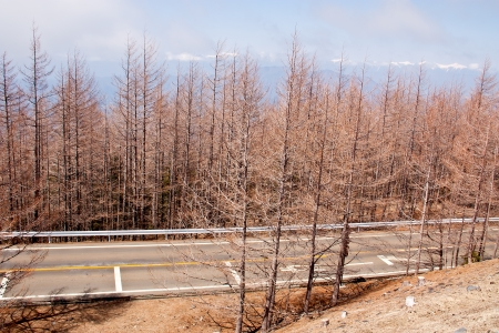 rainless: View on the mountain  See barren trees