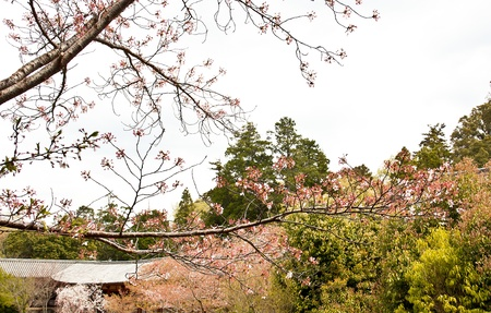 Sakura branch and flowers blooming blossom on sky background