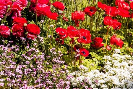 Red flower little bush in garden for background