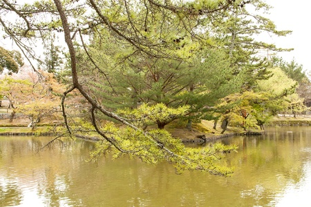 Branches of the tree that extends into the lake water. Stock Photo