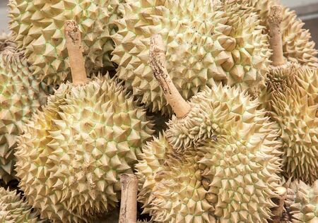 pile of durian on the wall for sale in local market in thailand photo