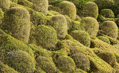 Shrubs of trees decorated on the outside  Stock Photo