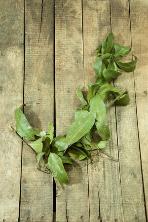 Green leaves on the wooden floor for background Stock Photo