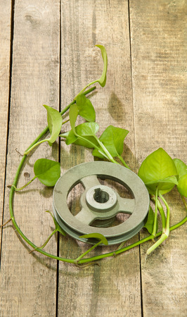 betel leaf: Old metal pulley with green betel leaf  on wooden background