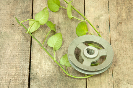 betel leaf: Old metal pulley with green betel leaf  on wooden