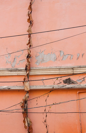 Haggard leaves on Orange Wall of Building. Stock Photo