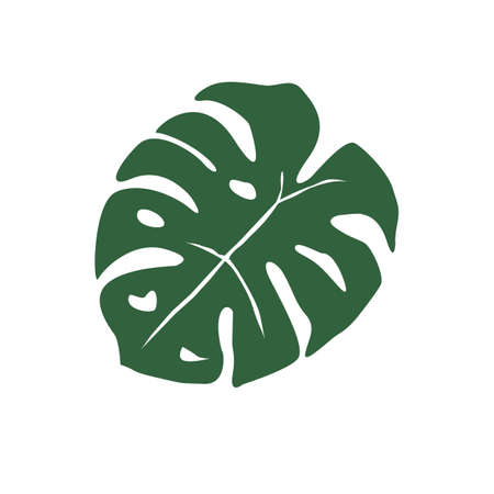 monstera leaf on white background. monstera tropical leaves (swiss plant). tropical jungle Monstera leaves sign. flat style.