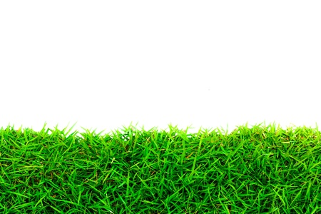 Green Grass Frame photo