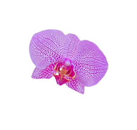 pink orchid flower close-up photo