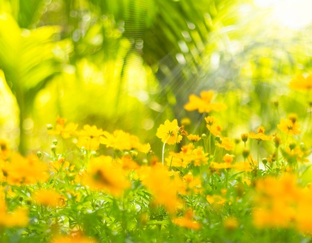 Beautiful spring flowers background photo
