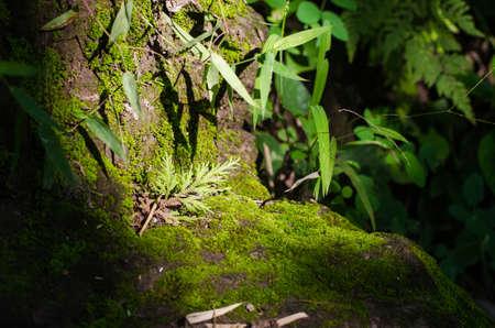 crecimiento planta: crecimiento de las plantas