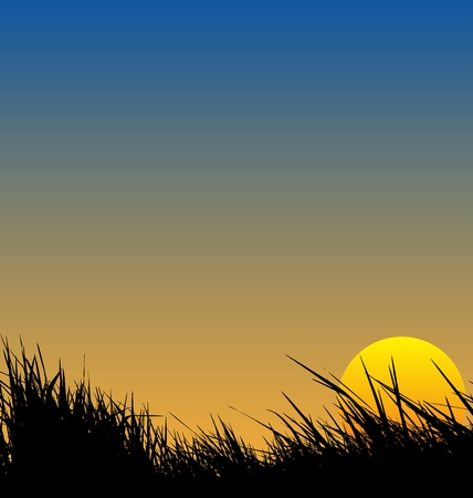 pasturage: vector illustration of  grass sunset background Illustration