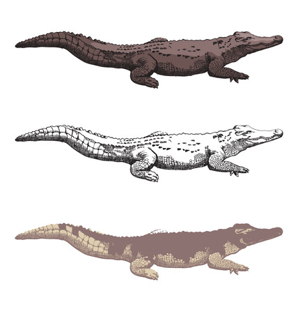 eyesore: Vector illustration of  hand-drawn crocodiles
