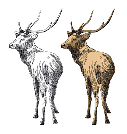 Vector illustration of  hand-drawn deer
