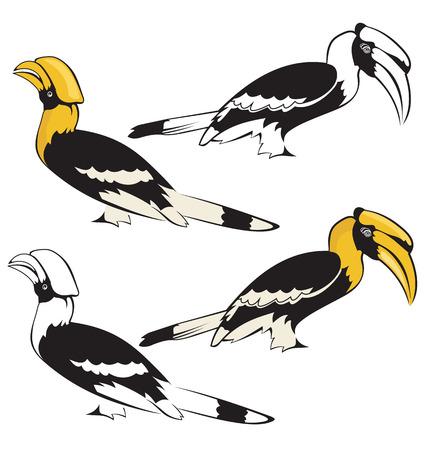 Vector illustration of hornbill  イラスト・ベクター素材
