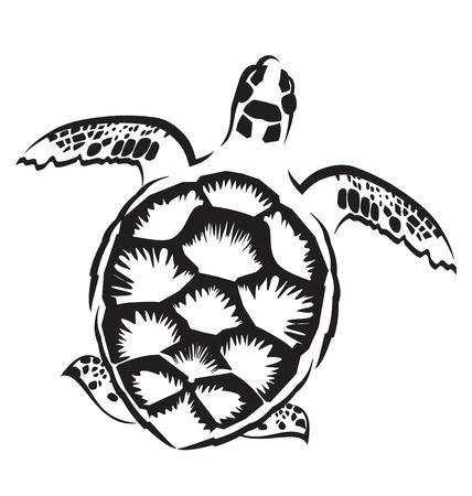 conchas: Vector de imagen de la tortuga en el fondo blanco