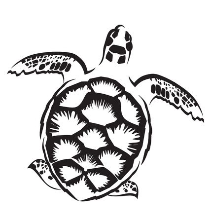 Vector image of  turtle on white background Vector