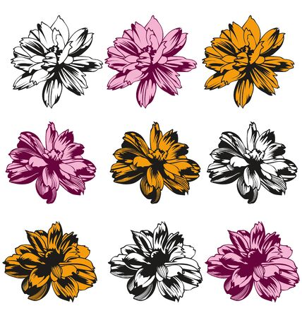 sillhouette: Sillhouette Cosmos flowers set on white background Illustration
