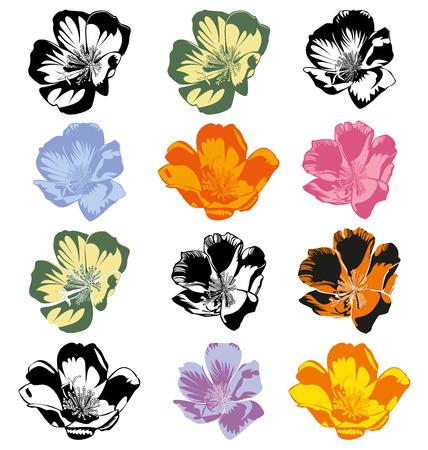 Vector illustration of  Portulaca  flower set