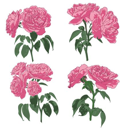 panicle: Vector illustration of roses panicle