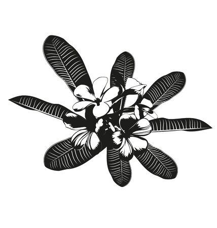 frangipani flower: Vector illustration of  silhouette frangipani flower