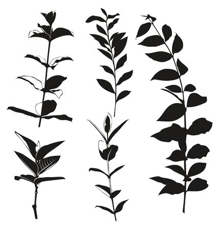 leafed: Vector illustration of   silhouette  leaves Illustration