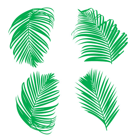 palm leaf: Vector illustration of  palm leaf set