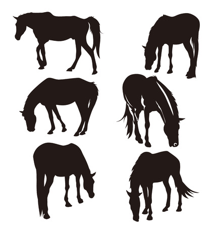 horse silhouette: Vector illustration of  horses silhouettes
