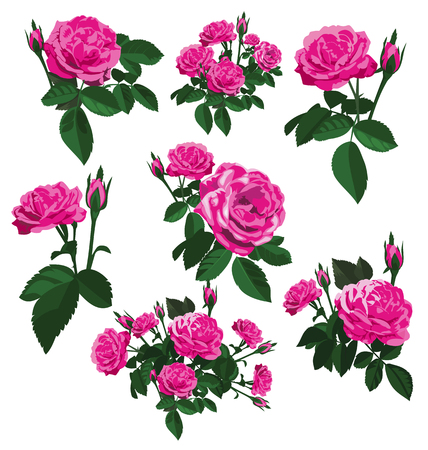 vector illustration of roses bouquet set Illustration