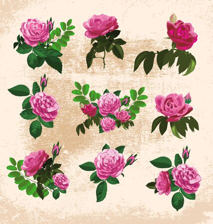 vector illustration of floral decor elements