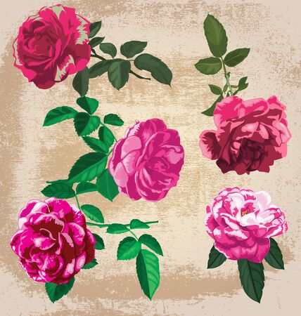 vector illustration of roses  set