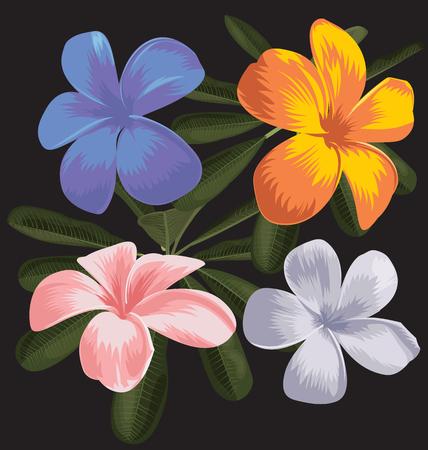 illustration of  frangipani (plumeria)