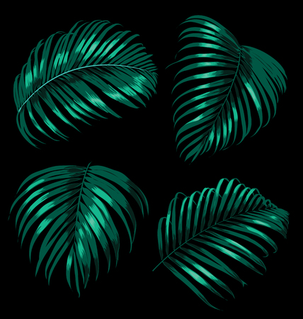 fronds: illustration of palm leaf set