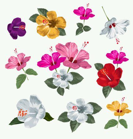 stamens: illustration of hibiscus set