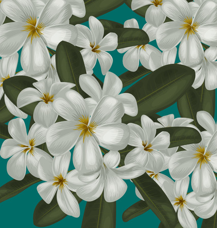 exoticism: Illustration of  plumeria  pattern  background