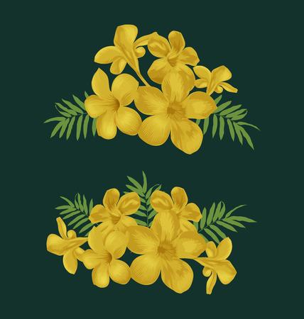 in common: Illustration of flower bunch set( Allamanda, Common allamanda, Golden trumpet, Golden trumpet vine, Yellow bell ) Illustration