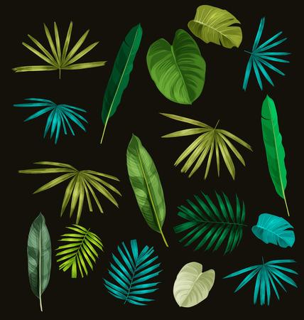 tropical leaf set on black background