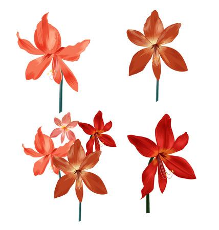 bunch: Illustration of Amaryllis bunch set
