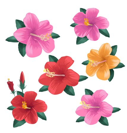 Illustration of  hibiscus flower set Illustration